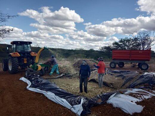 4bee5420-fd9e-4d79-8168-257529922644-520x390 Prefeitura de Zabelê da suporte a produção de silo para agricultores
