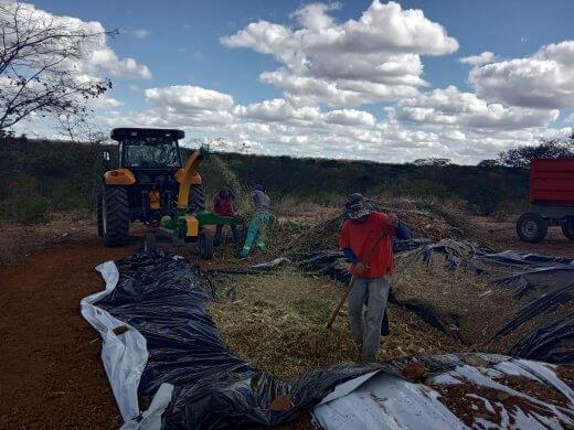 b88b0892-818d-4e59-a386-271b3dba221b-520x390 Prefeitura de Zabelê da suporte a produção de silo para agricultores
