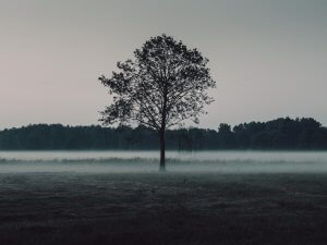 tree-in-grass Uruguai planta árvores para restaurar florestas
