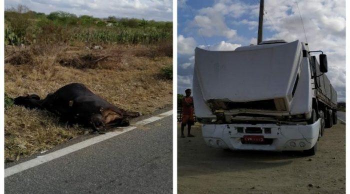 carreta-colisão-com-animal-700x389 Carreta colide contra animal na BR-110 em Monteiro