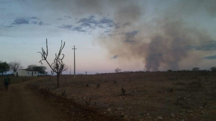 IMG-20191209-WA0415-700x394 Incêndio destrói vegetação e mata animais em Monteiro