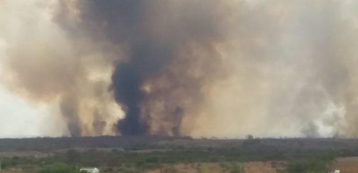 IMG-20191210-WA0178-700x340 Incêndio destrói vegetação e mata animais em Monteiro