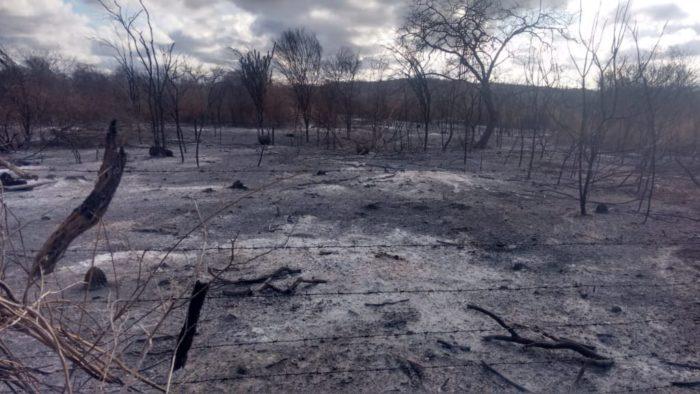 IMG-20191210-WA0181-700x394 Incêndio destrói vegetação e mata animais em Monteiro