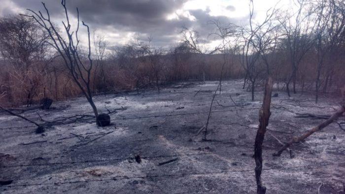 IMG-20191210-WA0182-700x394 Incêndio destrói vegetação e mata animais em Monteiro