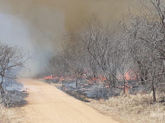 IMG-20191210-WA0193-533x400 Incêndio destrói vegetação e mata animais em Monteiro