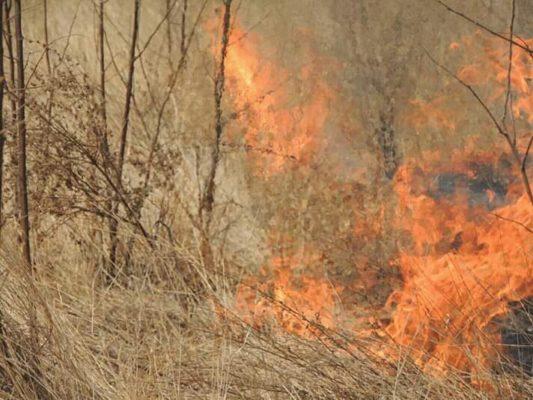 IMG-20191211-WA0138-533x400 Polícia identifica Agricultor suspeito de provocar queimadas na zona em Monteiro