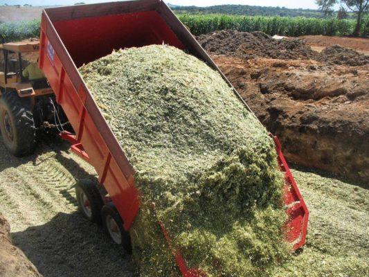 Monteiro-investe-em-Silagem-e-produção-supera-marca-de-300-Toneladas-1-533x400 RECORDE: Monteiro investe em Silagem e produção supera marca de 300 Toneladas