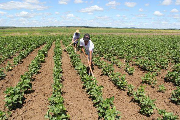 safra-seguro Garantia-Safra vai pagar R$ 19,2 milhões para mais de 22 mil agricultores familiares de quatro estados