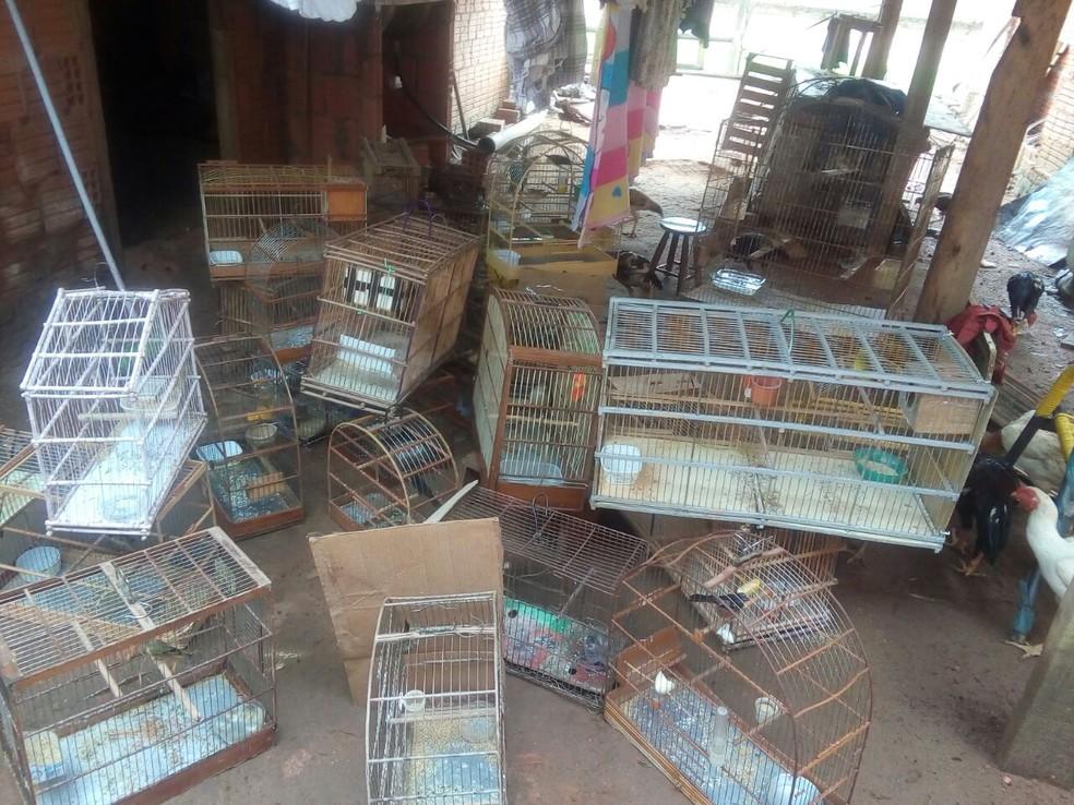 whatsapp-image-2018-03-27-at-15.29.07-533x400 Em Sertânia homem é levado à delegacia por comercializar pássaros silvestres