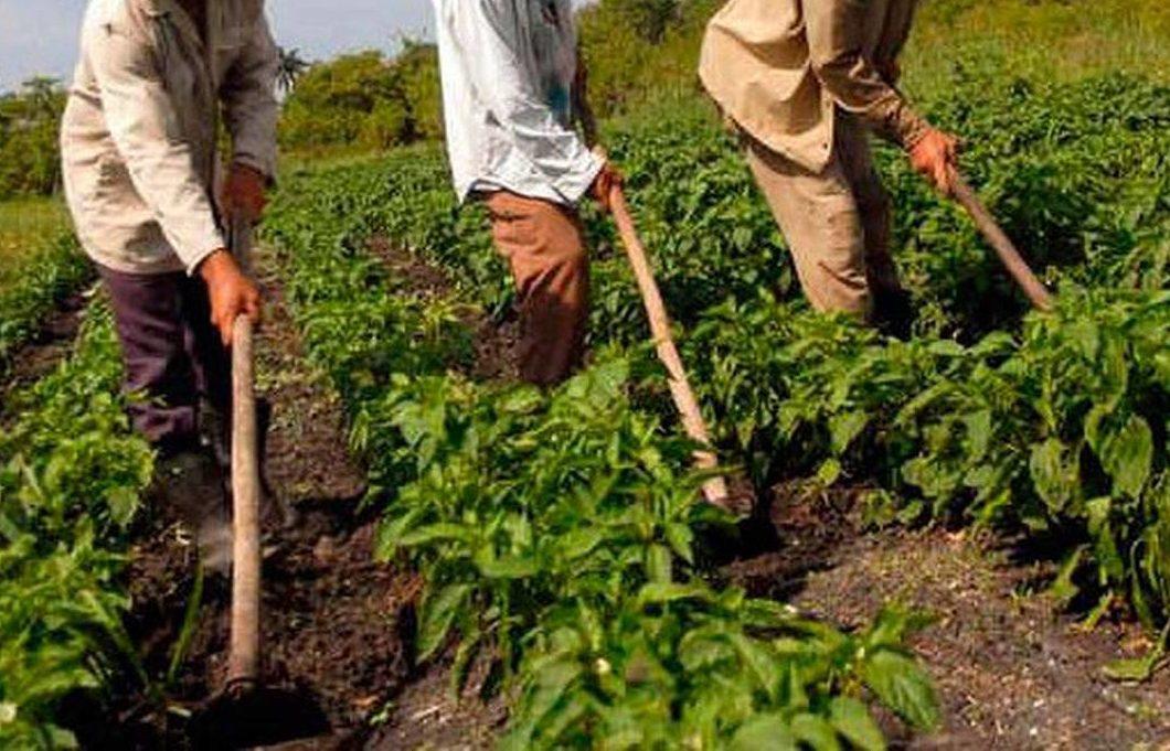 agricultores-623x400 Empaer faz atendimento on-line aos agricultores