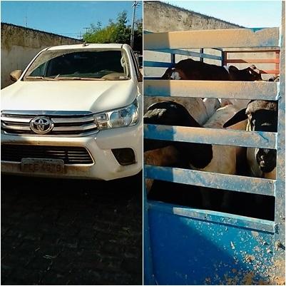 09-43-02-page Polícia Militar prende quadrilha em Sumé que havia roubado animais em uma propriedade rural no Pernambuco