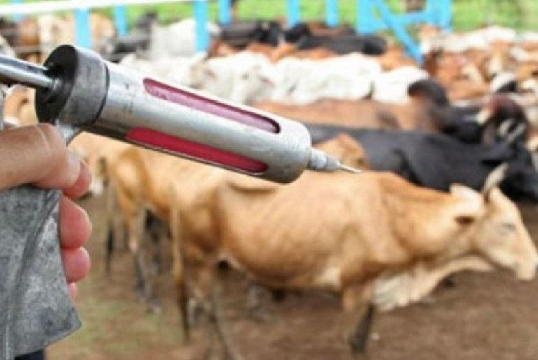 Campanha-Aftosa Campanha Aftosa: Prefeitura de Monteiro alerta para o prazo de vacinação