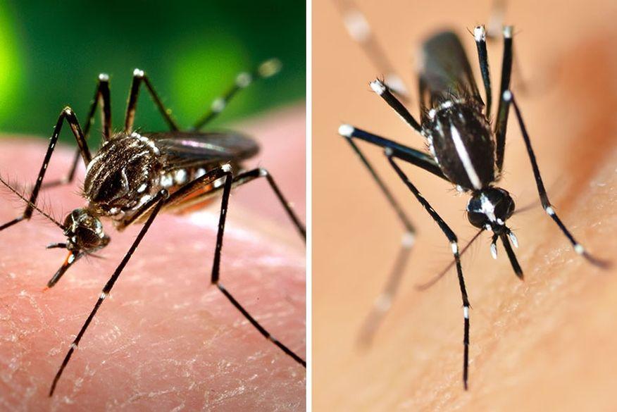 zica Nova linhagem do vírus da zika está em circulação no Brasil e pode originar epidemia, diz estudo