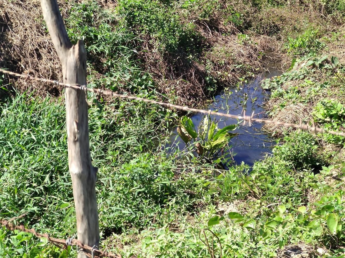1_IMG_20200723_091716 Moradores de Monteiro denunciam esgoto despejado nos rios Paraíba e São Francisco.