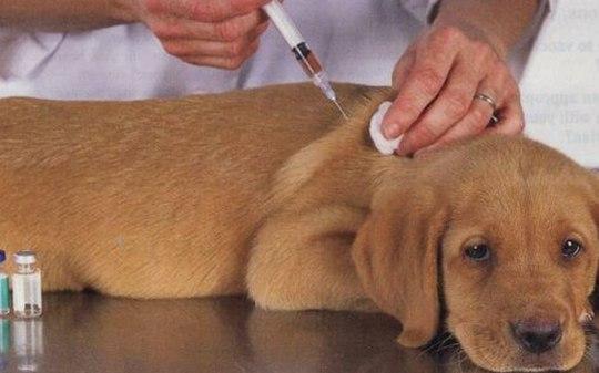 1o65e89spifq88eabflr8ui9n Começa Campanha Nacional de Vacinação contra a Raiva Animal em Monteiro