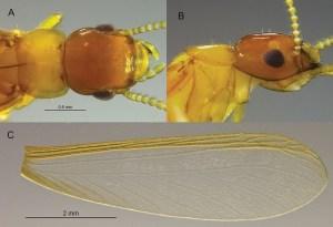 cupim-cariri Nova espécie de cupim é descoberta no Cariri paraibano por pesquisador da UFPB