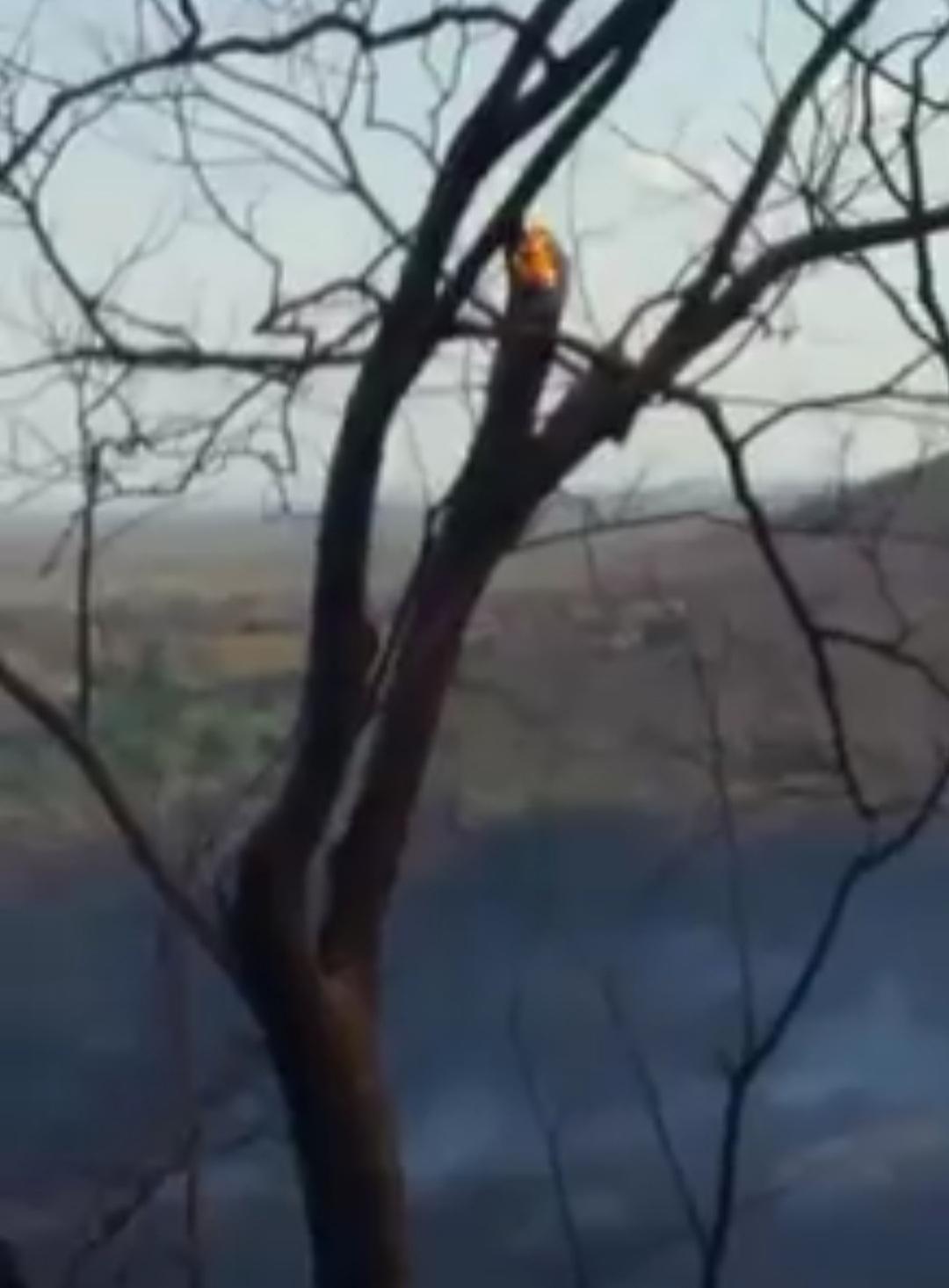 IMG_20201011_215733 Incêndio destrói vegetação e mata animais silvestres no município Sertânia