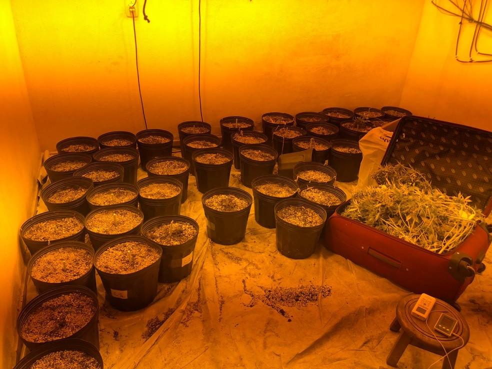 laboratorio-grotao Mais de 100 pés de maconha são apreendidos em laboratório de drogas na PB