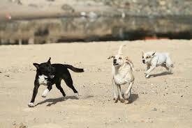 cachorro Decreto de prefeito autoriza sacrifício de animais soltos ou abandonados