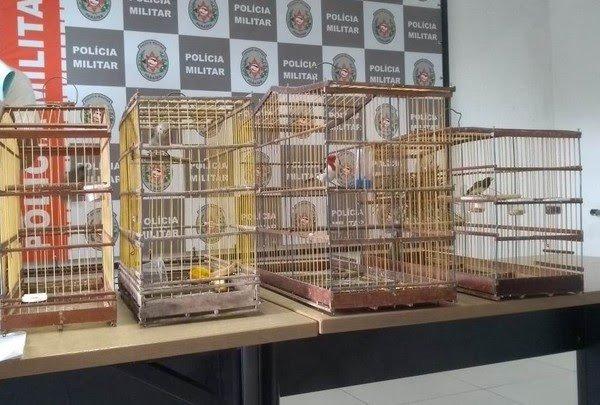 passaros Homem engole pássaro para tentar não ser preso por maus-tratos a animais na PB, diz PM