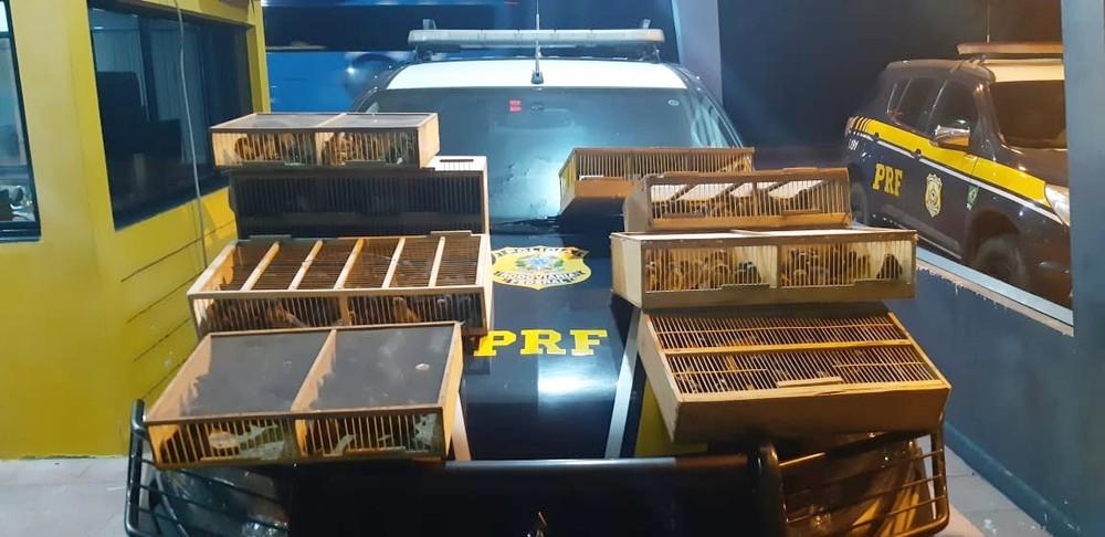 whatsapp-image-2021-02-20-at-08.42.25 Pai e filho são detidos com 300 pássaros silvestres em Sertânia