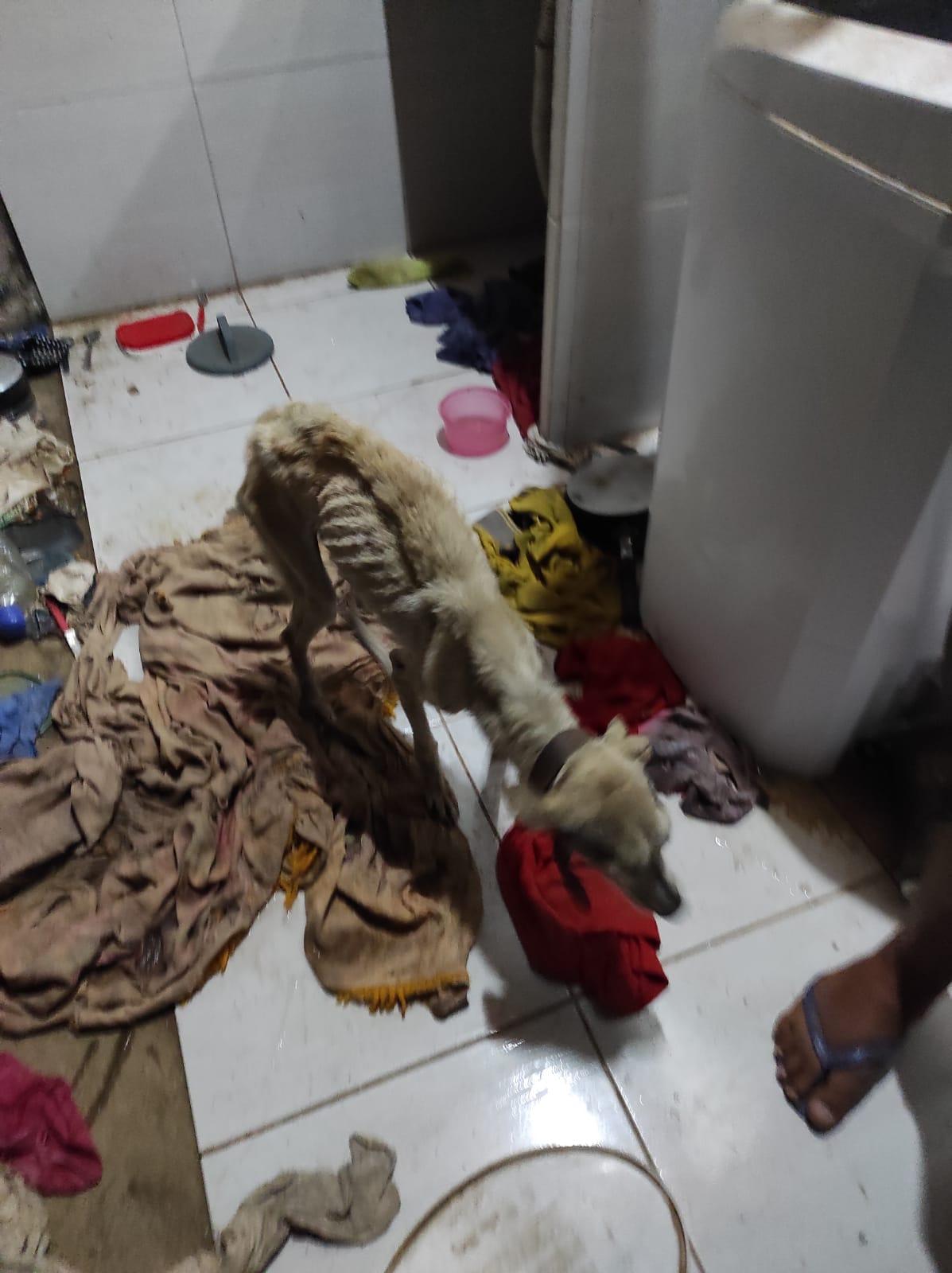 WhatsApp-Image-2021-08-31-at-03.05.23-1 Polícia resgata cachorros mantidos em situação de maus-tratos em Monteiro