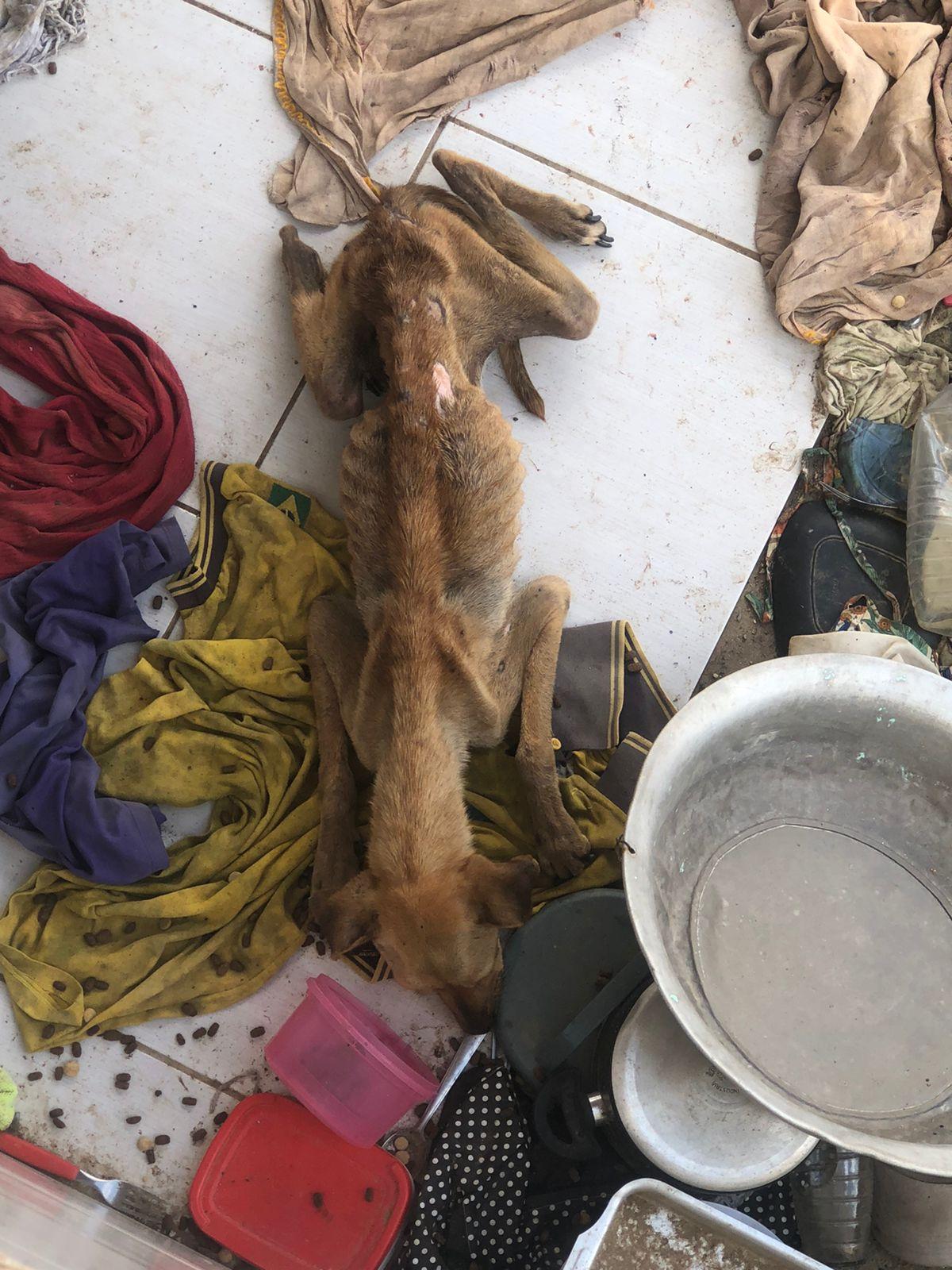 WhatsApp-Image-2021-08-31-at-03.05.23 Polícia resgata cachorros mantidos em situação de maus-tratos em Monteiro