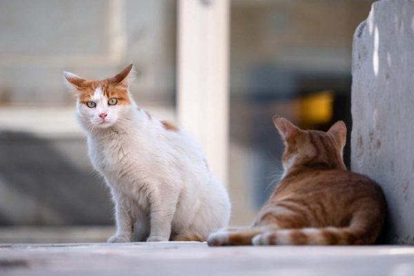 cats_5606202_1920-18656401-600x400 Justiça da Paraíba extingue ação que tem como autores 22 gatos