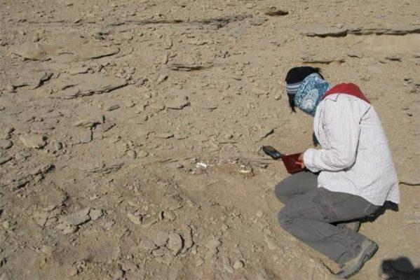 credito-wang-xiaolin-1-599x400 Cientistas descobrem duas novas espécies de dinossauro na China