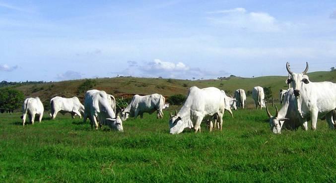 gado-21062021133520858 Ministério da Agricultura investiga suspeita de 'vaca louca' em MG